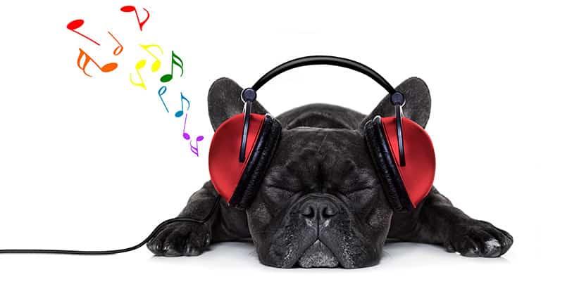 Hunde lieben Mozart – Haie harten Rock