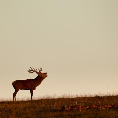 Das neue Naturschutzgesetz schließt den Menschen aus