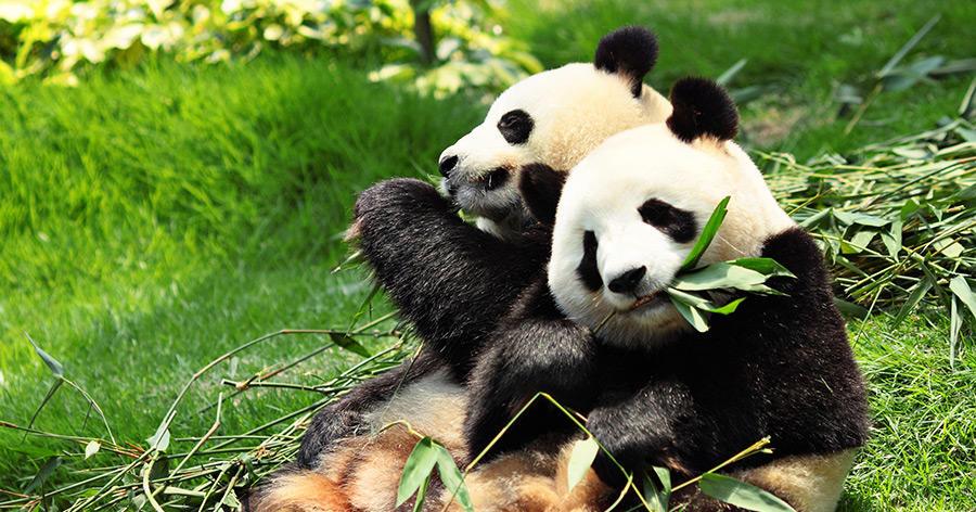 Die Pandas sind da – Schätzchen und Träumchen sind sicher gelandet
