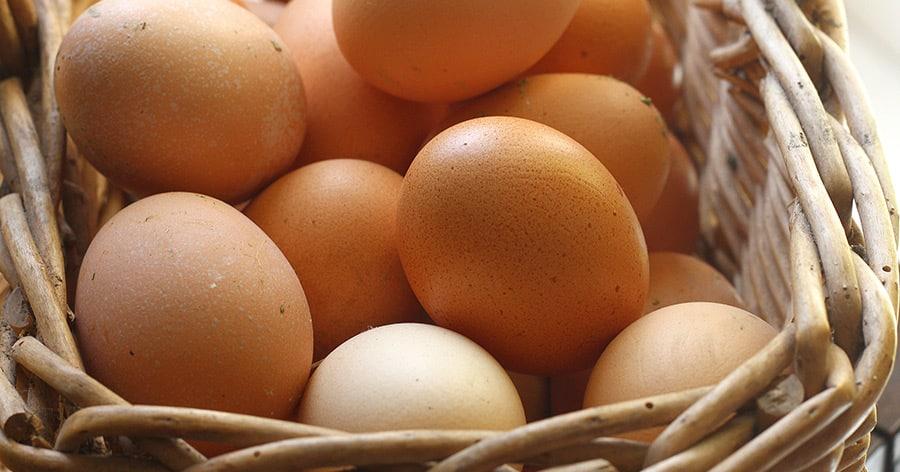 Bio-Eier – alles eine große Lüge?