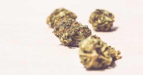 Was ist der Unterschied zwischen CBD- und Cannabisblüten?