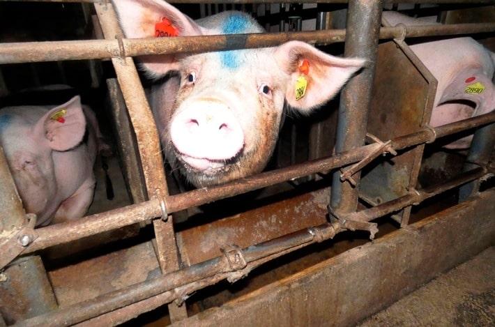 Themenabend Landwirtschaft: Von Billigfleisch und Nachwuchssorgen