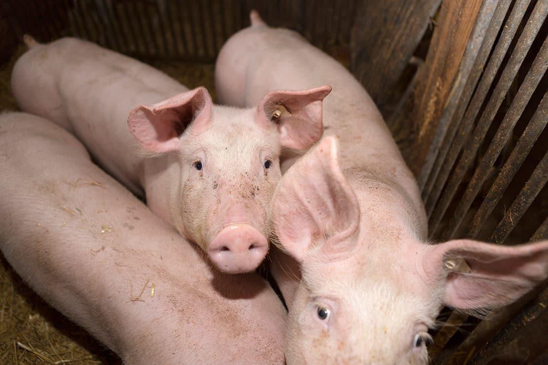 Warum mehr Tierschutz notwendig ist