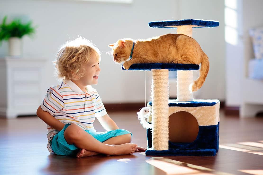 Was ist bei der Erstausstattung für Katzen wichtig?