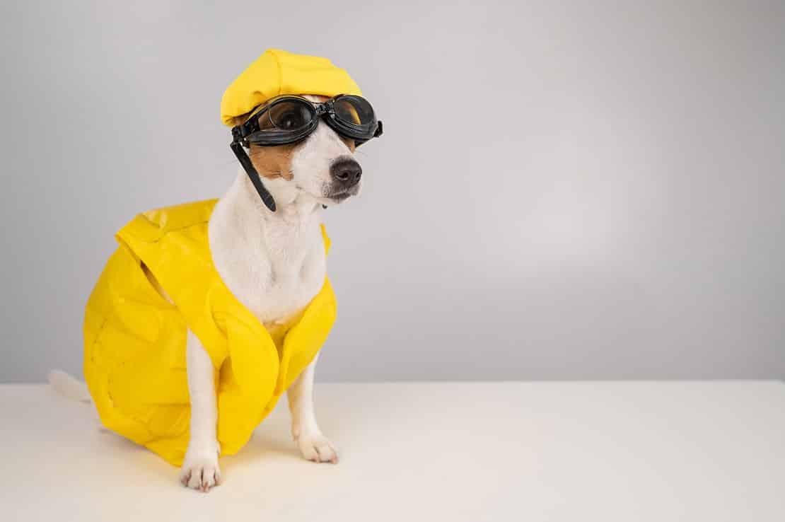 Hundepool und kühlende Matten – Sommererfrischungen für Haustiere