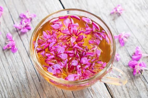 Weidenröschen Tee - unscheinbar, aber hochwirksam