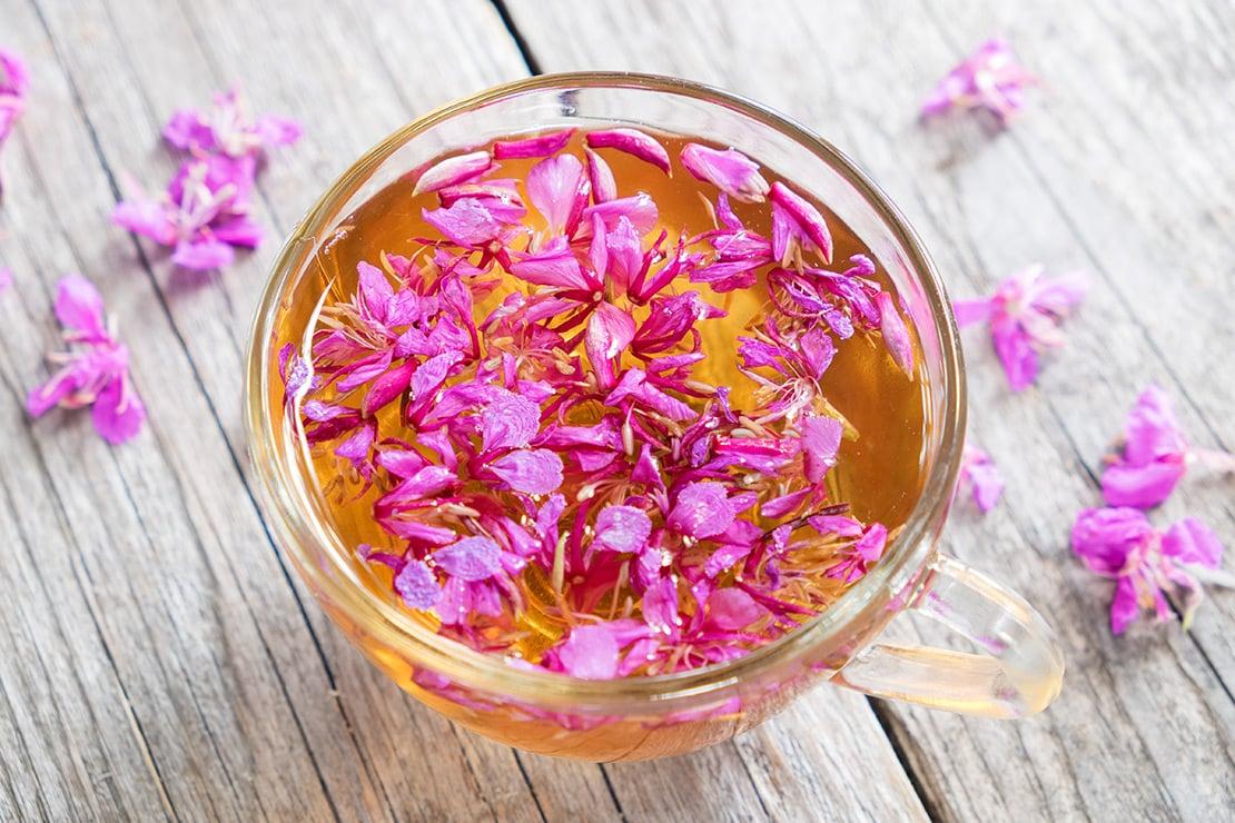 Weidenröschen Tee – unscheinbar, aber hochwirksam